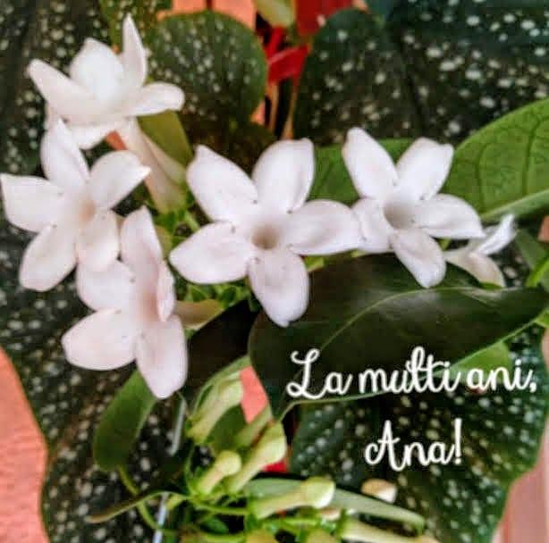 LamultianiAna.jpg